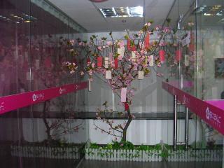 願い事がかけられている桜の木!?