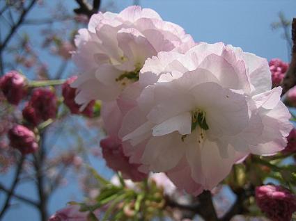 【春!】第二十八回 オフ会&交流会