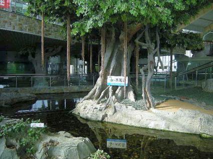 蛇博物館 入り口近く
