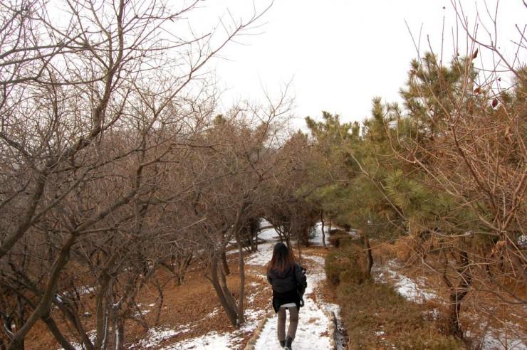 ちょっとした自然探索ができる登山路