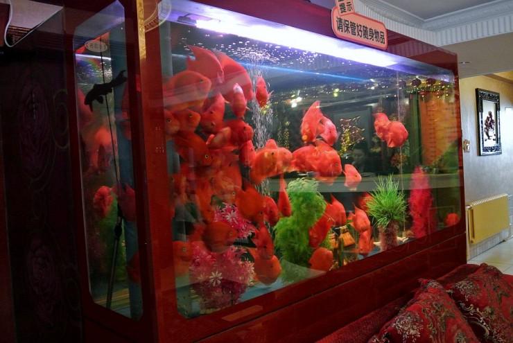1階の熱帯魚の水槽